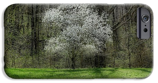 Indiana Springs iPhone Cases - Star Magnolia Tree iPhone Case by Sandy Keeton