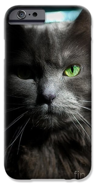 Joann Vitali iPhone Cases - Stare Down iPhone Case by Joann Vitali