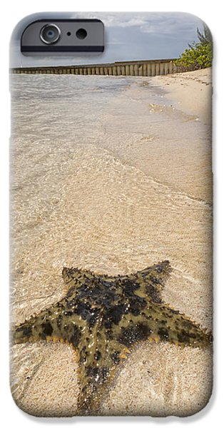Underwater Photos iPhone Cases - Starfish on the beach at Starfish Point iPhone Case by Adam Romanowicz