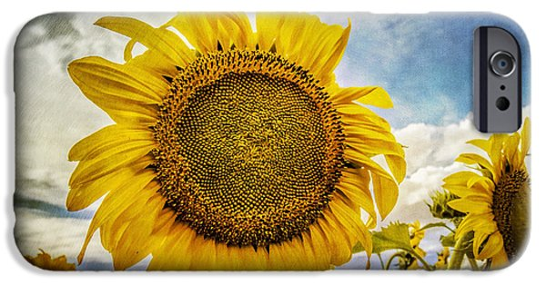 Crops iPhone Cases - Staring At The Sun iPhone Case by Janice Rae Pariza