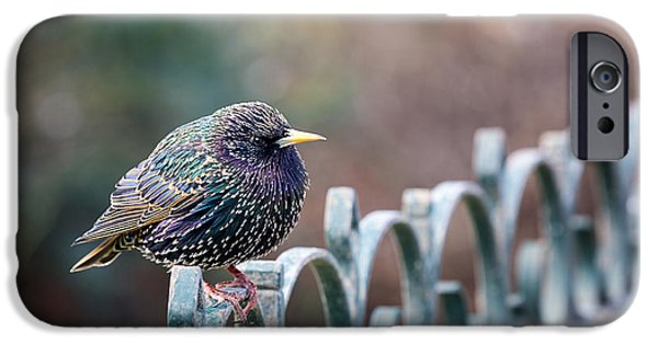 Fauna iPhone Cases - Starling juvenile male iPhone Case by Jane Rix