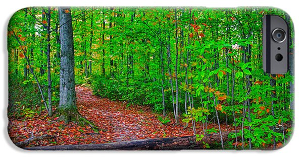 Pathway iPhone Cases - Stay the Course iPhone Case by John Bailey