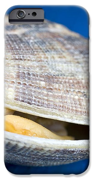 Steamed clam iPhone Case by Frank Tschakert