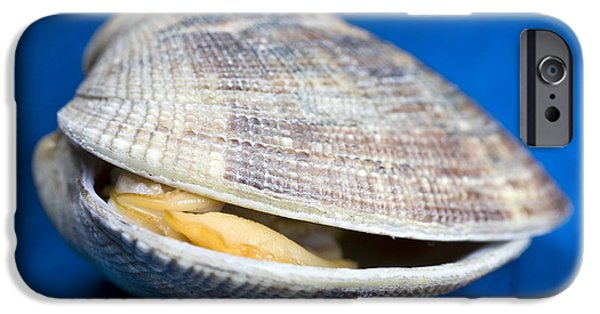 Deli iPhone Cases - Steamed clam iPhone Case by Frank Tschakert