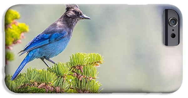 Recently Sold -  - Stellar iPhone Cases - Stellars Jay iPhone Case by Martin  Gollery
