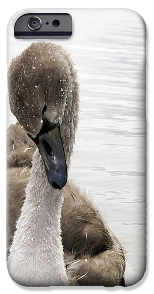 Still a Baby iPhone Case by Svetlana Sewell