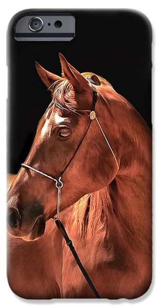 Horse iPhone Cases - Stings Ransom iPhone Case by CarolLMiller Photography