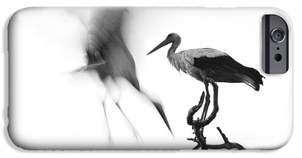 Stork iPhone Cases - Storks iPhone Case by Nahum Budin