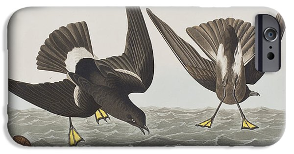 Barrel Paintings iPhone Cases - Stormy Petrel iPhone Case by John James Audubon