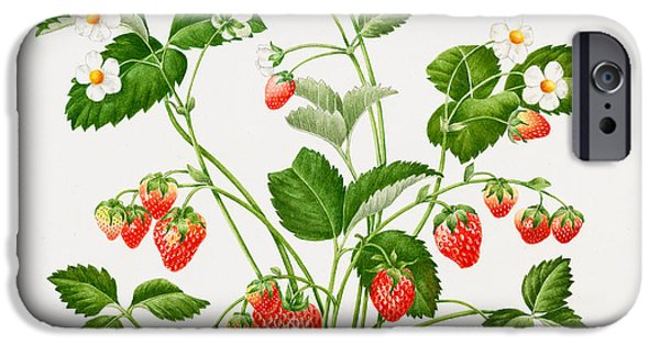 Flora Drawings iPhone Cases - Strawberry plant iPhone Case by Sally Crosthwaite
