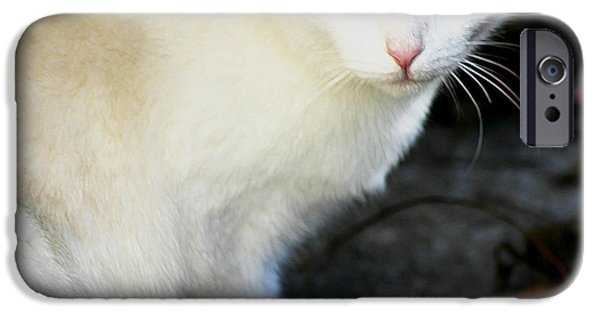 Photos Of Cats iPhone Cases - Stray Cat 2 iPhone Case by Ruben  Flanagan