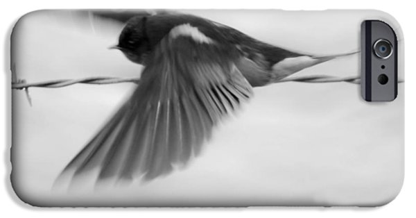 Barn Swallow iPhone Cases - Streaking Barn Swallow in Black and White iPhone Case by Charles Rockwell