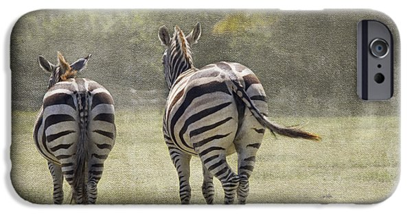 Zebra iPhone Cases - Strolling Home iPhone Case by Rebecca Cozart