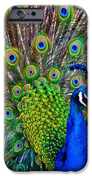 Zoo iPhone Cases - Strut iPhone Case by Angelina Vick
