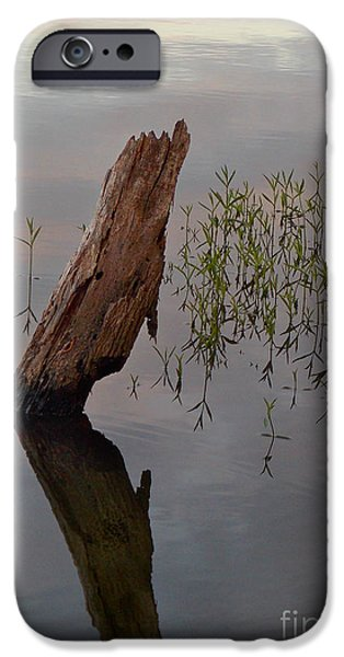 Covered Bridge iPhone Cases - Stump iPhone Case by Skip Willits