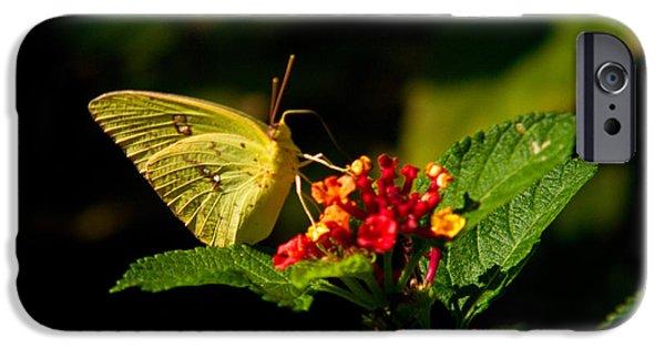 Arkansas iPhone Cases - Sulpher Butterfly on Lantana iPhone Case by Douglas Barnett