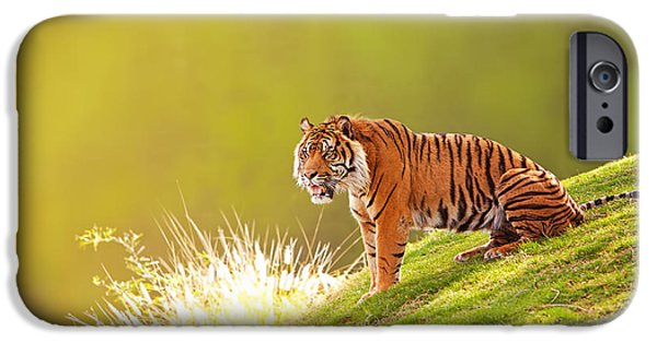 Afternoon iPhone Cases - Sumatran Tiger On Hillside In Morning Light iPhone Case by Susan  Schmitz