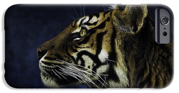 Tigers iPhone Cases - Sumatran tiger profile iPhone Case by Sheila Smart