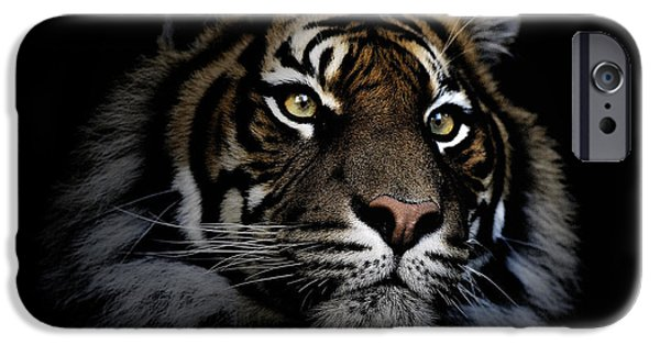 Tigers iPhone Cases - Sumatran tiger iPhone Case by Sheila Smart