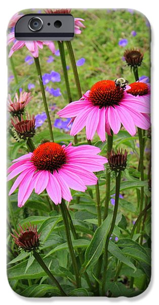Flora iPhone Cases - Summertime  Beauties - Coneflowers iPhone Case by  Photographic Art and Design by Dora Sofia Caputo