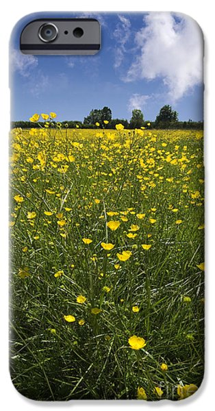 Agriculture Photographs iPhone Cases - Summer Buttercups iPhone Case by Meirion Matthias