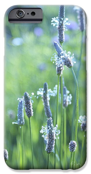 Summer Charm iPhone Case by Aimelle