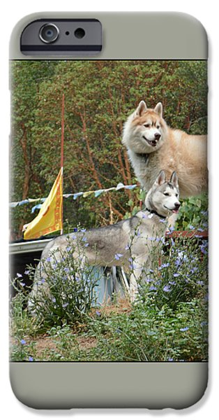 Dogs iPhone Cases - Summer Day iPhone Case by Lynda Hoffman-Snodgrass