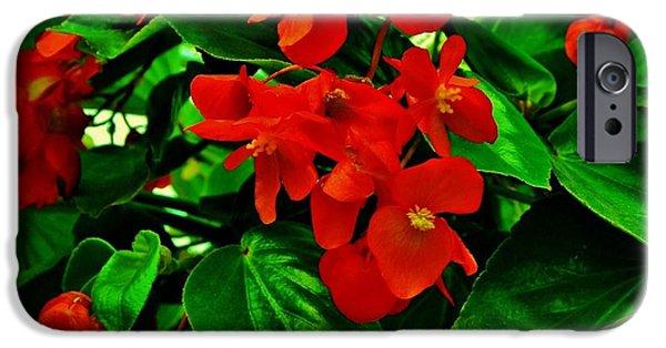 Red Geraniums iPhone Cases - Summer Geranium iPhone Case by Marsha Heiken