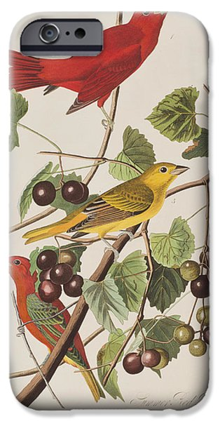 Summer Drawings iPhone Cases - Summer Red Bird iPhone Case by John James Audubon