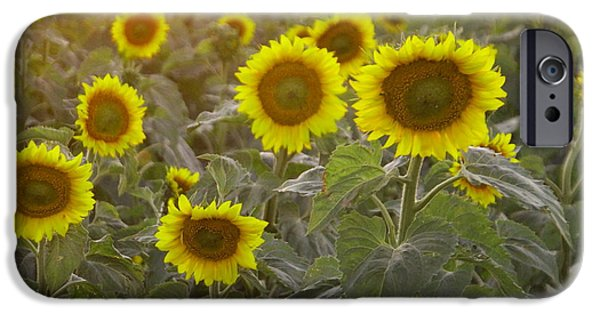 Floral Photographs iPhone Cases - Summer sun flowers iPhone Case by Jeff  Swan