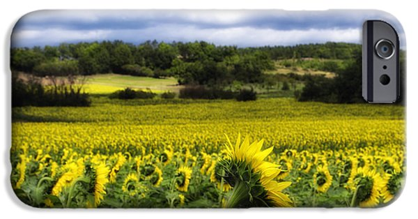 Agriculture iPhone Cases - Summer Sunflowers iPhone Case by Georgia Fowler