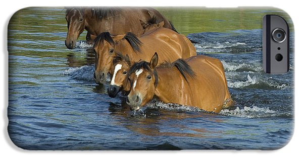 Horse iPhone Cases - Summer Swim iPhone Case by Sue Cullumber