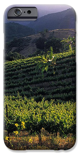 Summer Vineyard iPhone Case by Kathy Yates