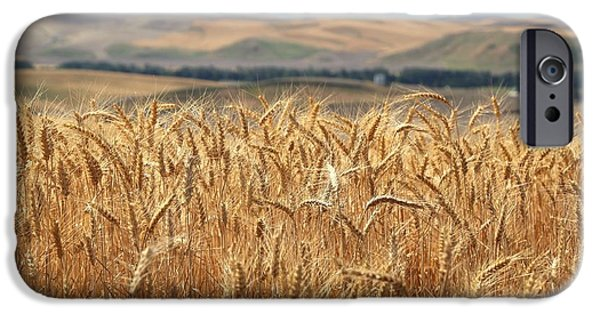 Prescott iPhone Cases - Summer wheat 2 iPhone Case by Lynn Hopwood