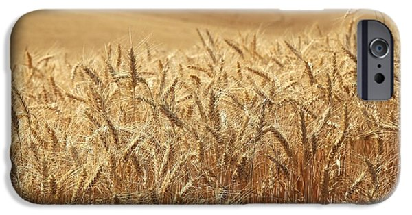 Prescott iPhone Cases - Summer wheat iPhone Case by Lynn Hopwood