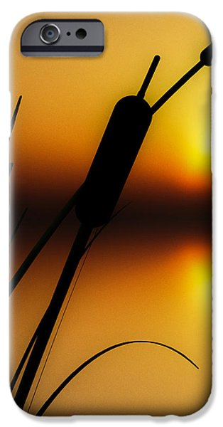 Summertime Whispers  iPhone Case by Bob Orsillo