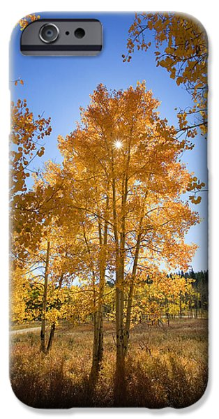 Sunflare iPhone Cases - Sun Through Aspens iPhone Case by Ron Dahlquist - Printscapes