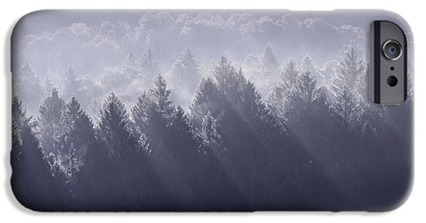 Forest iPhone Cases - Sunbeams iPhone Case by Yuri Santin