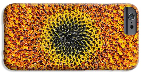 Abstract Sunflower iPhone Cases - Sunflower Abstract iPhone Case by Kaye Menner