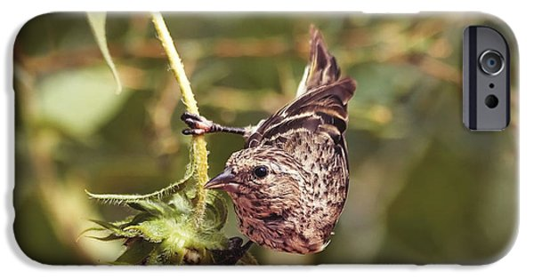 Fauna iPhone Cases - Sunflower and the Sparrow iPhone Case by Janice Rae Pariza