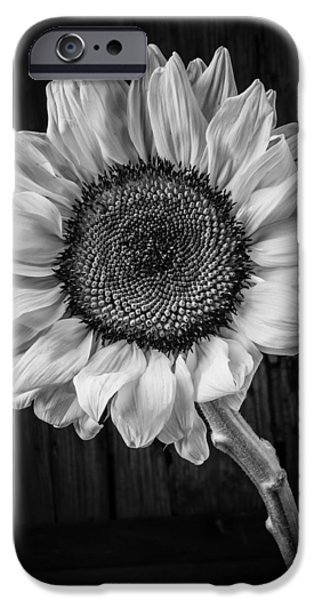 Sunflowers Photographs iPhone Cases - Sunflower Black And White iPhone Case by Garry Gay