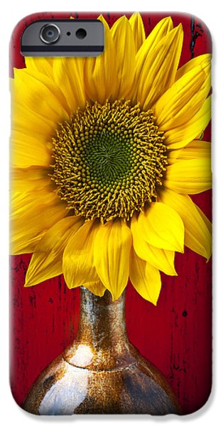 Flora Photographs iPhone Cases - Sunflower Close Up iPhone Case by Garry Gay