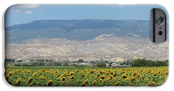Crops iPhone Cases - Sunflower Farming Splendor In Delta CO iPhone Case by Dale Jackson