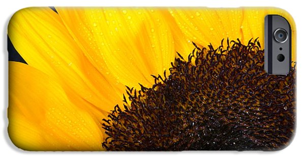 Nature Study iPhone Cases - Sunflower Magic iPhone Case by Valerie Cozart