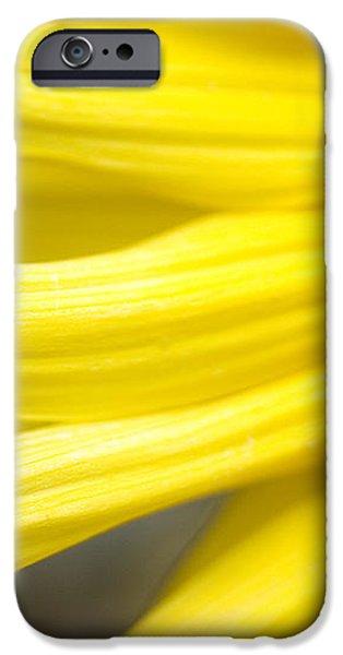 Sunflower iPhone Case by Mary Van de Ven - Printscapes