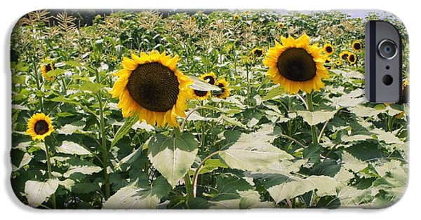 Crops iPhone Cases - Sunflower Maze iPhone Case by Laurie Perry