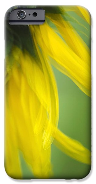Abstract Sunflower iPhone Cases - Sunflower Motion Blur iPhone Case by Christina Rollo