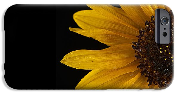 Close Up iPhone Cases - Sunflower Number 3 iPhone Case by Steve Gadomski
