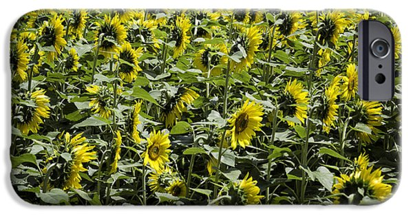 Griswold Ct iPhone Cases - Sunflower Patterns iPhone Case by Fran Gallogly