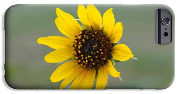 Morning Jewelry iPhone Cases - Sunflower iPhone Case by Sarah Pacheco